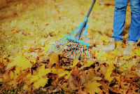 Boise Idaho Lawn Care Clean Up Service